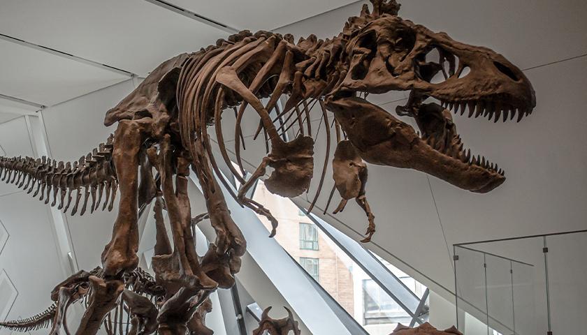 T Rex fossil exhibit